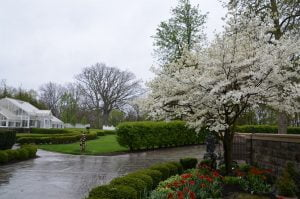 Buhl Mansion Gardens and Greenhouse (15)